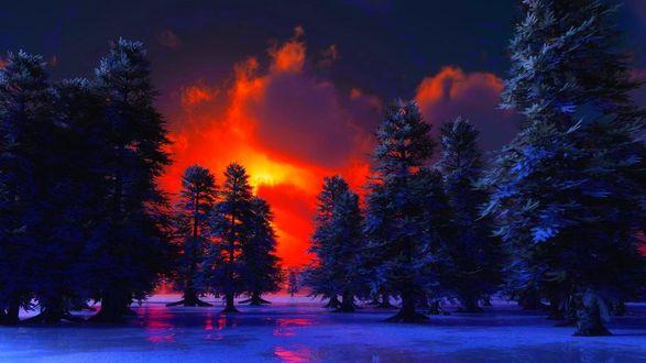 Обои Зимний яркий закат меж деревьев