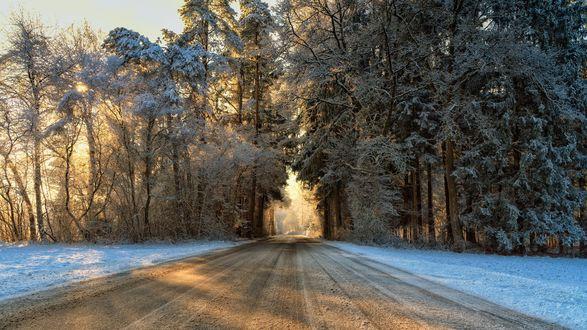Обои Зимняя асфальтовая дорога через лесополосу, уходящая вдаль, на рассвете