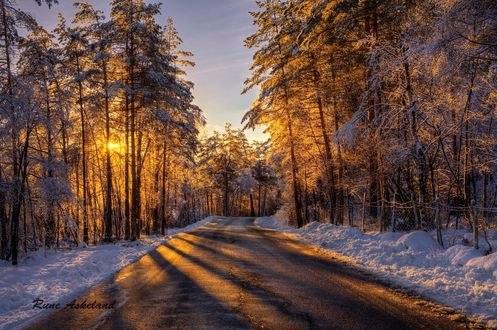 Обои Дорога и деревья освещены лучами зимнего солнца, фотограф Rune Askeland