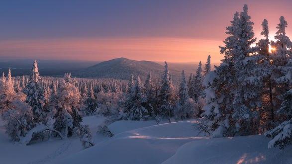 Обои Елки, покрытые снегом, Таежная сказка от фотографа marateaman