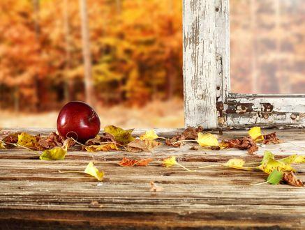 Обои Красное яблоко на подоконнике среди осенних листьев