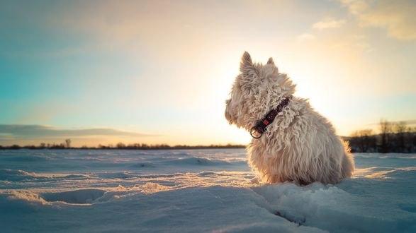 Обои Собачка сидит на снегу в ожидании хозяина, фотограф Somebody Anywhere