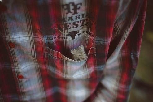 Обои В кармане рубашки парня сидит мышка, фтограф Dasha Demina
