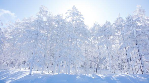 Обои Сказочное утро в заснеженном лесу