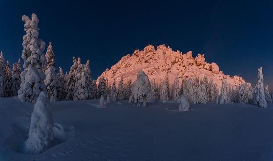 Обои Работа за час до рассвета, деревья и гора в снегу, фотограф Трахтенберг Михаил