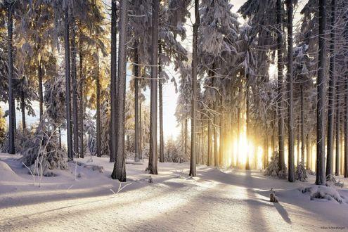 Обои Солнце освещает зимний лес, фотограф Kilian Schönberger