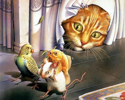 Обои Рыжий кот из под штор наблюдает, как сбегают попугай и мышь, которая уносит на спине рыбку