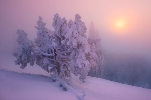 Обои Розовый рассвет зимой, фотограф Tobias Ryser