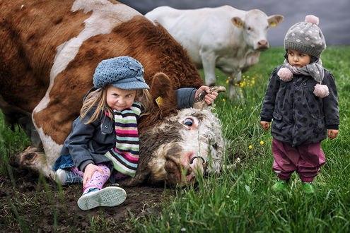 Обои Маленькая девочка прижала голову коровы к земле, ее подруга наблюдает за этим, думая, чем это закончится