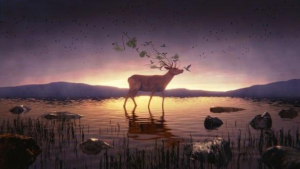Обои Фантастический олень стоит в воде, by IkyuValiantValentine