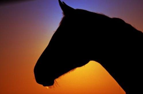 Обои Профиль коня на красном фоне