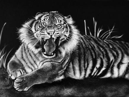 Обои Разъяренный тигр лежит на траве