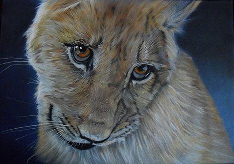 Обои Хитро улыбающаяся морда львенка