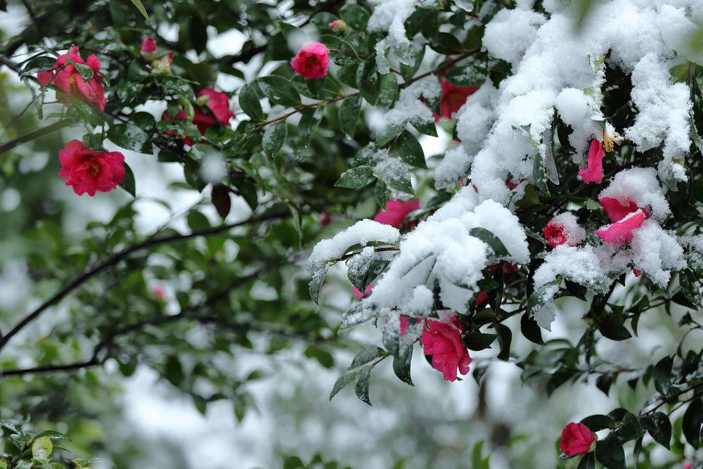 можно снег и цветы фото днях звездная пара