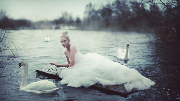 Обои Девушка в шикарном сводебном платье лежит на плоту посреди озера, вокруг нее плавают лебеди