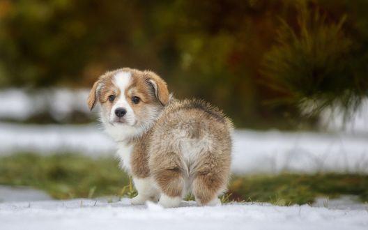 Обои Замерзший щенок стоит на снегу