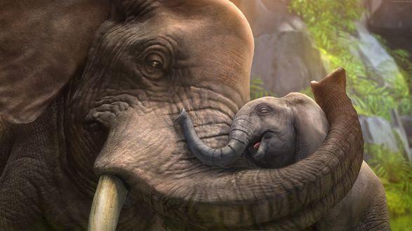 Обои Слоненок с любовью прильнул к маме слонихе