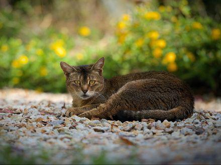 Обои Кот отдыхает на природе