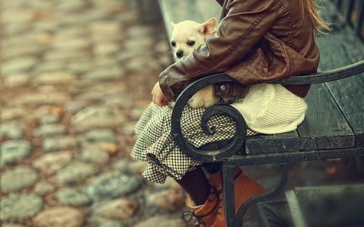 Обои Девочка с белым щенком сидит на лавочке, фотограф Сапронова Ирина