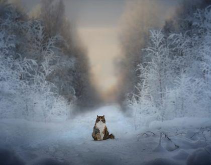 Обои Кошка сидит нв зимней дороге, фотограф Elena Shumilova