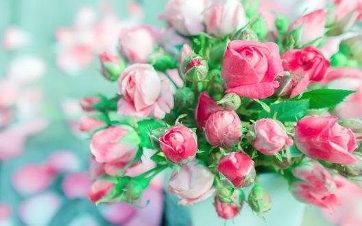 Обои Букет бело-розовых роз
