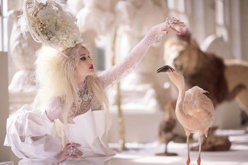 Обои Девушка в изысканном наряде держит руку над фламинго, фотограф Leonid Gurevich