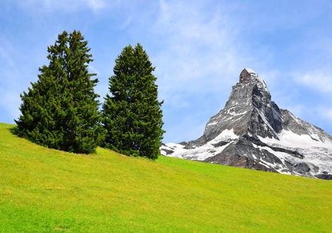 Обои Две одинокие ели на альпийском лугу на фоне скалы, Альпы, Швейцария / Alps, Switzerland