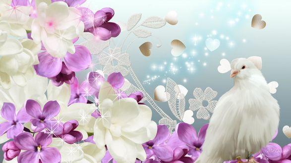 Обои Белый голубь около весенних цветов на фоне сердечек, звездочек