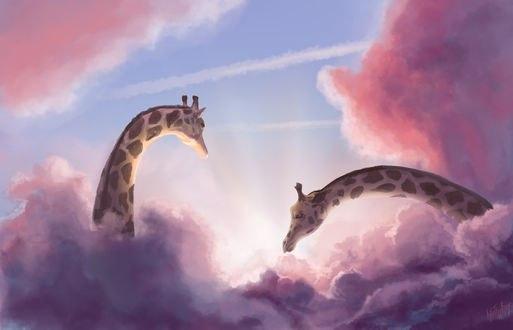 Обои Жирафы в розовых облаках, автор Into The Bear