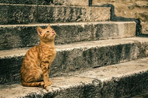 Обои Рыжий кот сидит на ступеньках