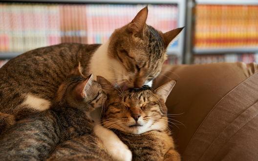 Обои Счастливая кошачья семья