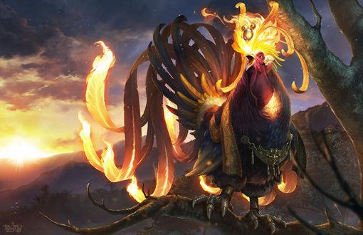 Обои Огненный петух сидит на ветке дерева