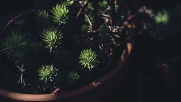 Обои Ветви растения в горшке