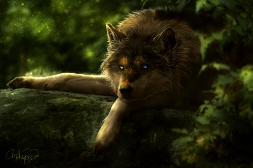 Обои Волк с разного цвета глазами лежит на камне, арт by Amphispiza