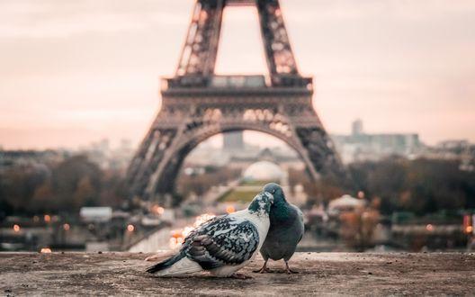 Обои Пара голубей на фоне Эйфелевой башни