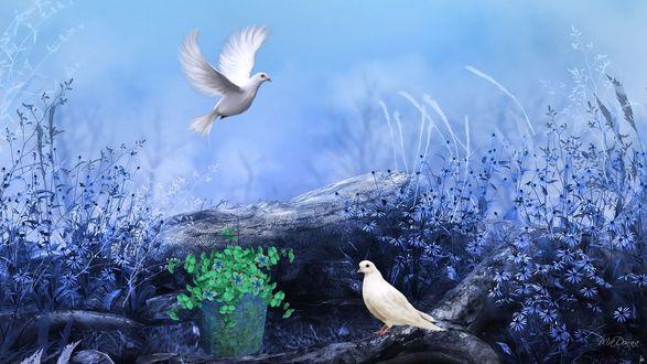 Обои Белые голуби в поле, один летит, второй на дереве, среди травы, рядом полено со свежей травой