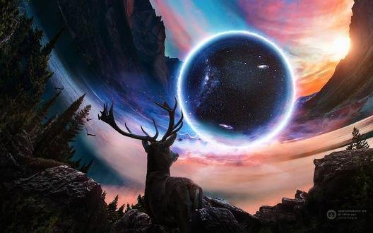 Обои для рабочего стола Олень смотрит в небо на планету, by Kevin May (© Arinka jini),Добавлено: 19.02.2017 03:51:31