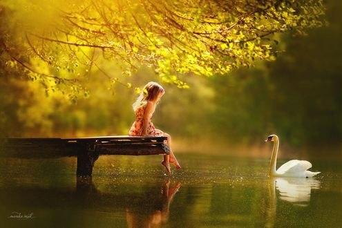 Обои Девочка сидит на мостике перед лебедем в воде, фотограф Monika Serek
