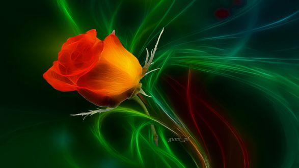 Обои Фрактальная желто-красная роза на зеленом фоне