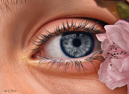 Обои Глаз девушки и цветок, by renen02