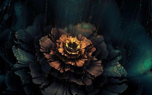 Обои Красивый цветок под дождем