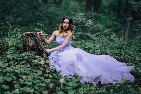 Обои Девушка в сиреневом платье сидит у пня в лесу. Фотограф Евгения Литовченко / Evgeniya Litovchenko