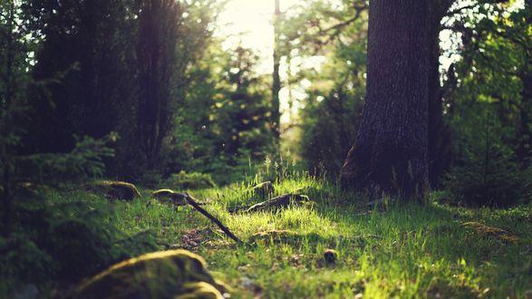 Обои Утро в летнем лесу