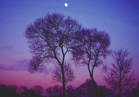 Обои Деревья на фоне вечернего неба, фотограф Borderone