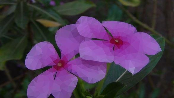 Обои Лиловые цветы, фотограф Blood-Frost