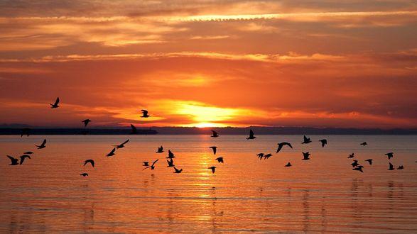Обои Закат над рекой и стая птиц