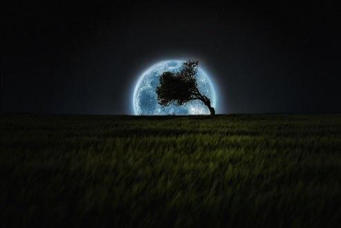Обои Одинокое наклонившееся дерево стоит на фоне луны и ночного неба, by Vitor Santos