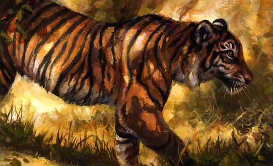 Обои Тигр на природе, by kenket