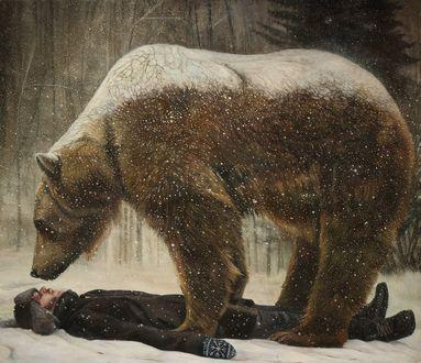 Обои Над мужчиной лежащим на снегу, стоит медведь, by Christer Karlstad