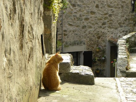 Обои Рыжий кот сидит возле стены на солнышке
